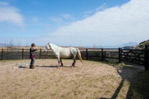 horses macalla farm